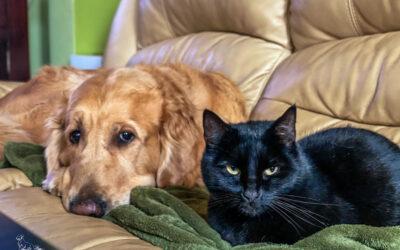 Jak pies z kotem?