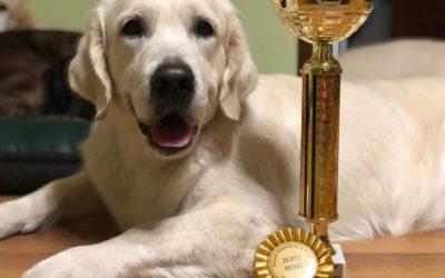 National Dog Show Pruszków